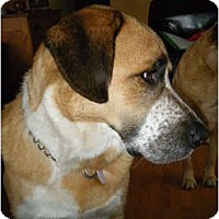 Adopt A Pet :: Luther - Rigaud, QC
