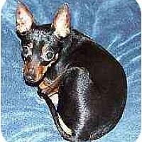 Adopt A Pet :: Chica bonita - Summerville, SC