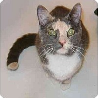 Adopt A Pet :: Janis - Etobicoke, ON