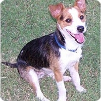 Adopt A Pet :: ELLINGTON - Phoenix, AZ