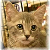 Adopt A Pet :: Burt - Irvine, CA
