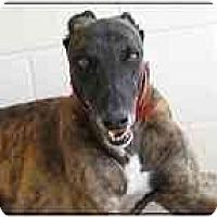 Adopt A Pet :: Axel - St Petersburg, FL