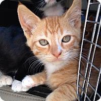 Adopt A Pet :: Chesney - Irvine, CA