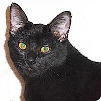 Adopt A Pet :: Yates - North Highlands, CA