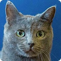 Adopt A Pet :: Kelby - Calgary, AB