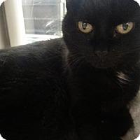 Adopt A Pet :: Carla -NEEDS FOSTER - Herndon, VA