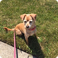 Adopt A Pet :: Chloe - Chicago, IL