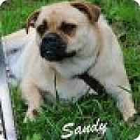 Adopt A Pet :: Sandy - Crowley, LA