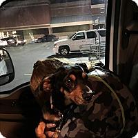 Adopt A Pet :: Myrtle - West Columbia, SC