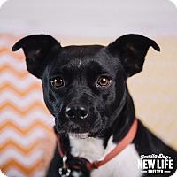 Adopt A Pet :: Stella - Portland, OR