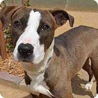 Adopt A Pet :: ALLIE - Martinez, CA