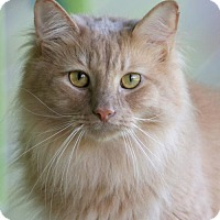 Adopt A Pet :: Nico - North Fort Myers, FL