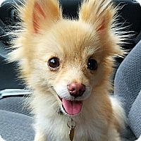 Adopt A Pet :: Lorna - Oakland, CA