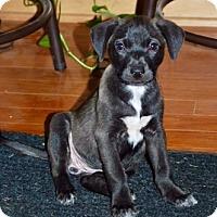 Adopt A Pet :: Rip-ADOPTION PENDING - East Windsor, CT