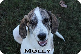 Hound (Unknown Type)/Catahoula Leopard Dog Mix Dog for adoption in Texarkana, Arkansas - Molly