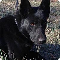 Adopt A Pet :: Halle - Sacramento, CA