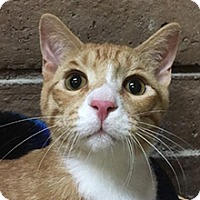 Adopt A Pet :: Maxwell - Phoenix, AZ