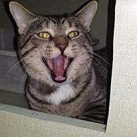 Adopt A Pet :: MC Hammer - Iroquois, IL