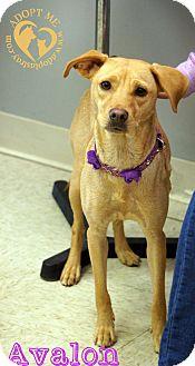 Terrier (Unknown Type, Medium)/Feist Mix Dog for adoption in Newport, Kentucky - Avalon
