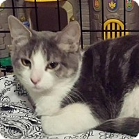 Adopt A Pet :: Lucy Loo - Midvale, UT