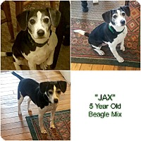 Adopt A Pet :: JAX - Findlay, OH