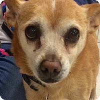 Adopt A Pet :: Hope in Ct - Manchester, CT