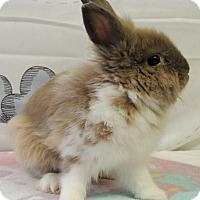 Adopt A Pet :: Cricket - Williston, FL