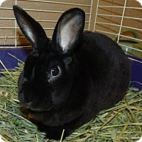 Adopt A Pet :: 48498 Marty $35 neutered friendly and young too - Zanesville, OH