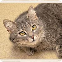 Adopt A Pet :: Gwen - Wooster, OH