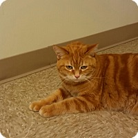 Adopt A Pet :: Peaches - Medina, OH