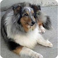 Adopt A Pet :: Lily Marlene - Mission, KS
