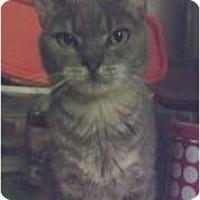 Adopt A Pet :: Akani - Fort Lauderdale, FL