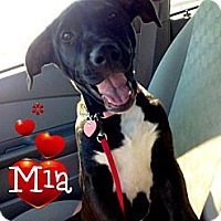 Adopt A Pet :: Mia - New Orleans, LA