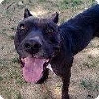 Adopt A Pet :: EMMA - Valley Village, CA