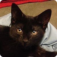 Adopt A Pet :: Kai - St. Louis, MO
