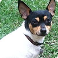 Adopt A Pet :: 'LEGO' - Brooksville, FL