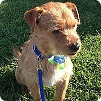 Adopt A Pet :: Baxter - Encinitas, CA