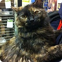 Adopt A Pet :: Sophia - Pittstown, NJ