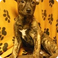 Adopt A Pet :: Delilah - Gary, IN
