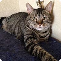 Adopt A Pet :: Jimmy - Temecula, CA