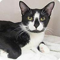 Adopt A Pet :: Ria - Seminole, FL