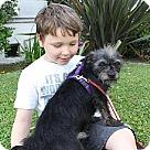 Adopt A Pet :: Alvin