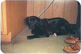 Labrador Retriever Dog for adoption in Longs, South Carolina - Jellie