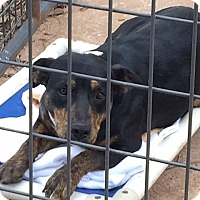 Adopt A Pet :: Jewel - Newcastle, OK