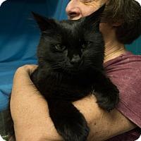 Adopt A Pet :: Noah - Brockton, MA