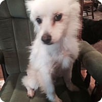Adopt A Pet :: Simon Adoption Pending - East Hartford, CT