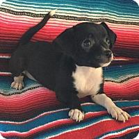 Adopt A Pet :: McKenzie - Gilbert, AZ