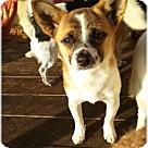 Adopt A Pet :: Sweet