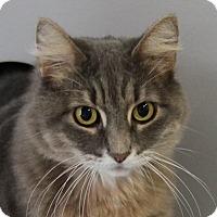 Adopt A Pet :: Holly - Sarasota, FL
