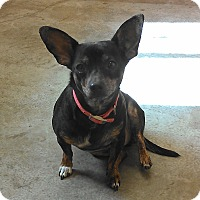 Adopt A Pet :: Chester - Larned, KS